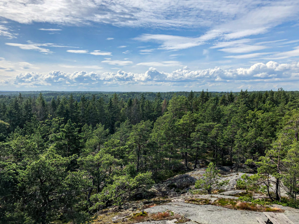 View from the lookout tower at Björnö, looking over the forest