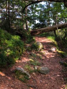 Most difficult trail at Björnö, a tree blocking the path