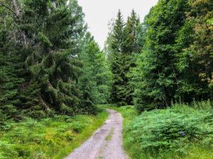 Easy trail at björnö