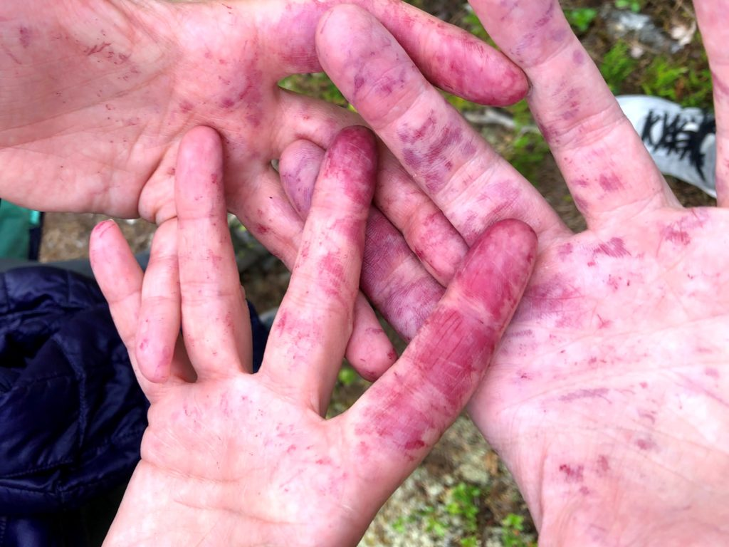Blueberry stained hands